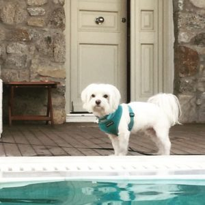 """<img src=""""dogbypool.png"""" alt=""""Maltese dog by the pool"""">"""